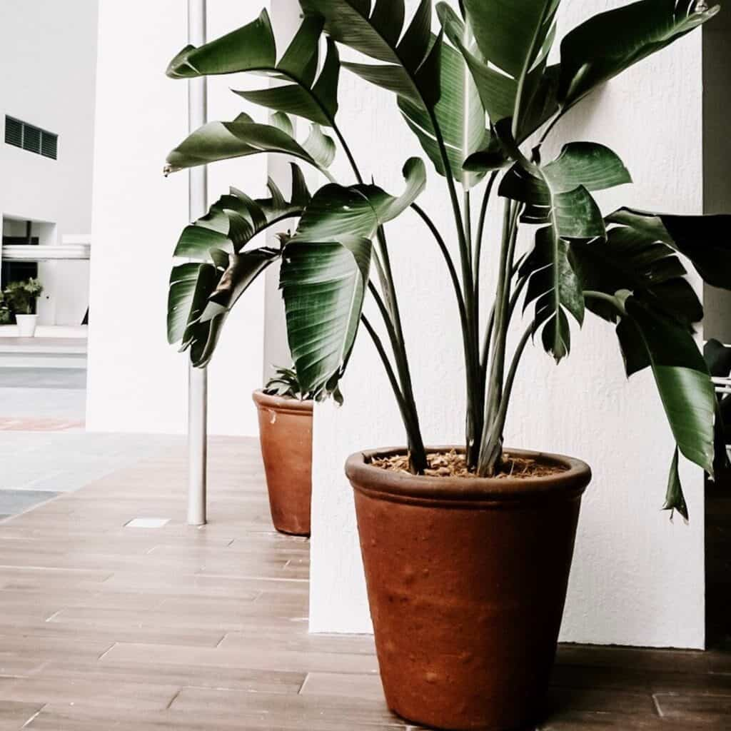 A houseplant in a dark terra cotta planter makes the home cozy by adding some color and warmth.