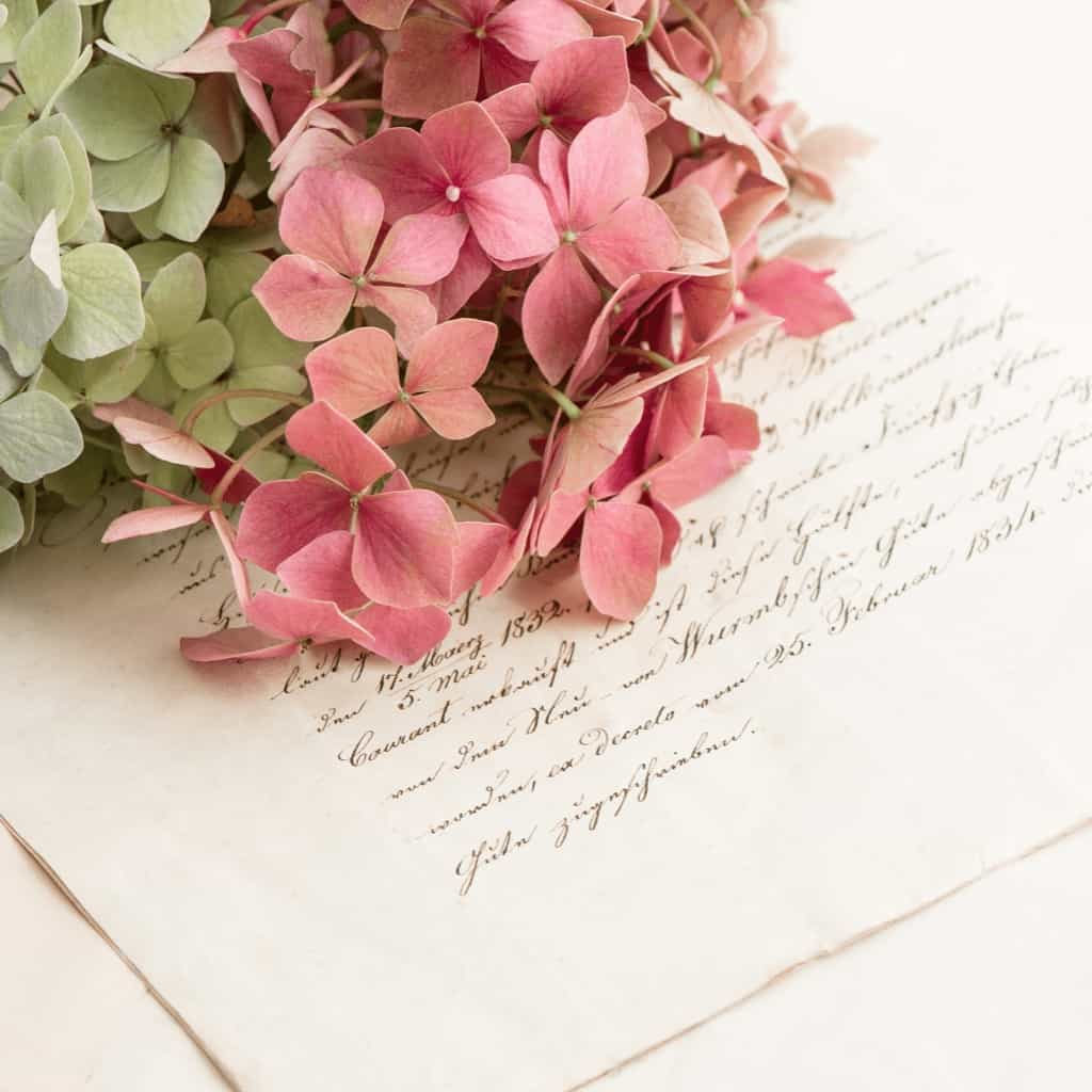 Image shows a handwritten letter and pink and green hydrangeas.