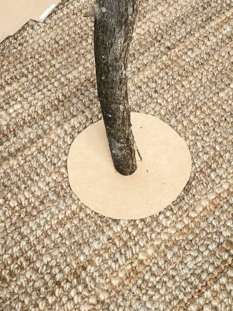 The tree branch in the center of the cardboard circle to trace out a hole.